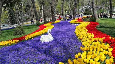 istanbul tulip festival in emirgan 2014 tulip festival in istanbul at emirgan park