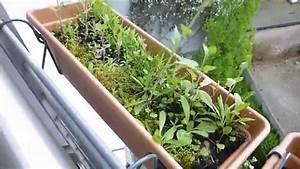 Schimmel In Pflanzen : pflanzen update 16 schimmel in der erde und umpflanzaction youtube ~ Bigdaddyawards.com Haus und Dekorationen