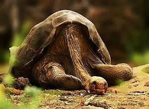 The Rarest Animal In The World Today   www.pixshark.com ...