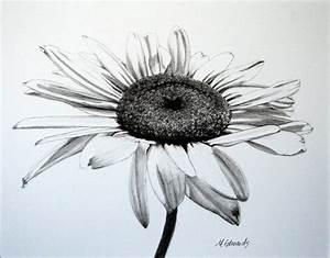 Daisy Drawings   Joy Studio Design Gallery - Best Design