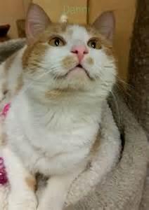 petsmart cats for adoption cunningham cambridge petsmart cats for adoption