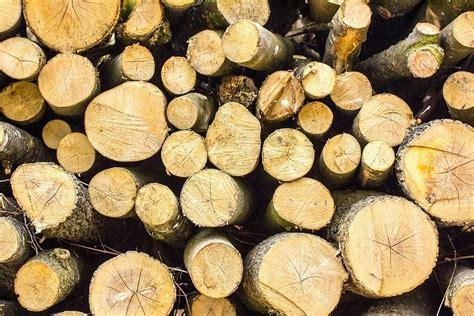 Izmaiņas koku ciršanas noteikumos var radīt risku arī ...
