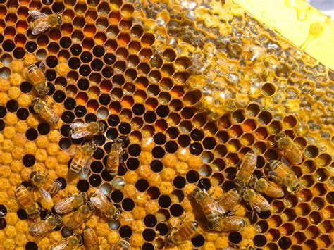 It's The Birthright Of Bees To Build Comb