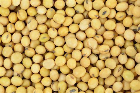 japan increasing soybean imports    world grain