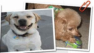 pawsitively reliable pet sitters of tulsa oklahoma With reliable dog sitters