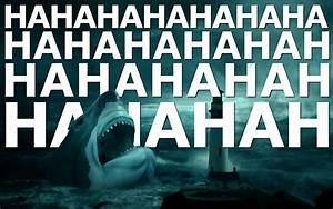 Laughing shark wallpaper #17556