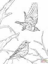 Coloring Bluebird Western Pages Realistic Printable Drawing Clipart Cliparts Clip Library Categories sketch template
