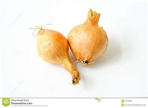 is garlic a vegetable garlic vegetable stock photos image 16790303