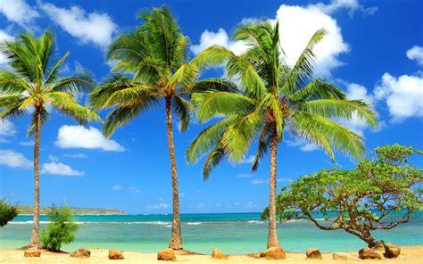Christmas Tree Types Usa by Hawaii Beach Palm Trees Wallpaper
