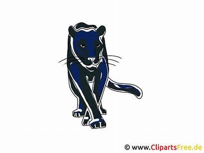 Clipart Puma Pantera Utklipp Clipartsfree Zoo