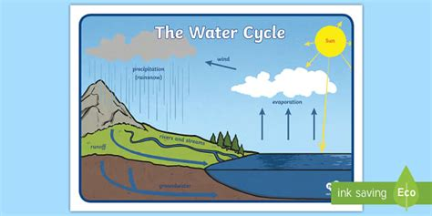 Boar Cycle Diagram by Free The Water Cycle Display Posters