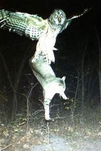 Trail Cam Craziness #2 - Just More Insane Trail Cam Pics