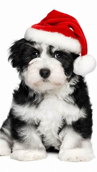 Christmas Dog Iphone Puppy Dogs Wallpapers Warm