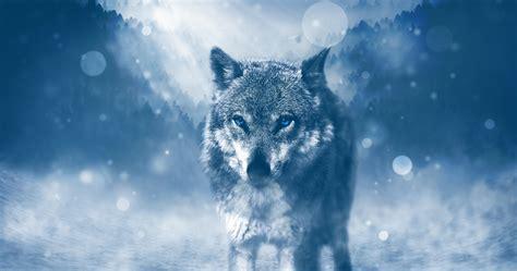 Fondos Para Escritorio De Lobos Fondos De Pantalla