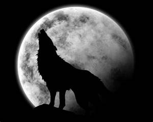 Wolf howling at the moon | Black and White | Pinterest