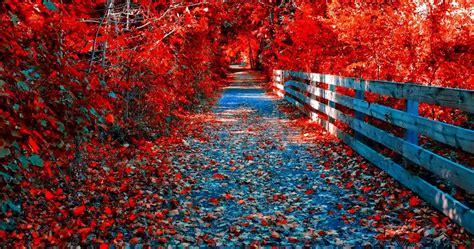 Autumn 4k Uhd Wallpapers by Purple Leaves In Autumn 4k Ultra Hd Wallpaper 187 High