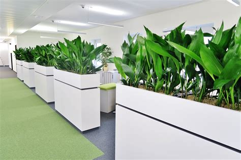 pflanzen als raumteiler raumbegr 252 nung m 252 nchen baum im raum planen kaufen pflegen