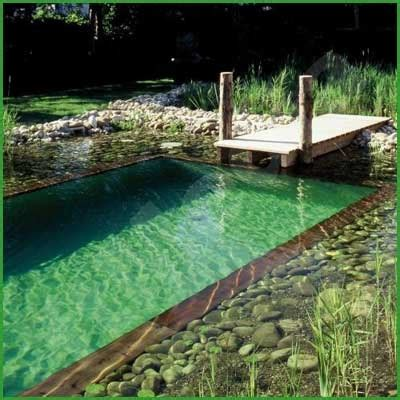 Natural Swimming Pools  Diy Cozy Home