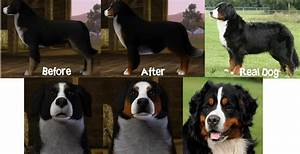 Better Bernese Mountain Dog - Cresties Creations