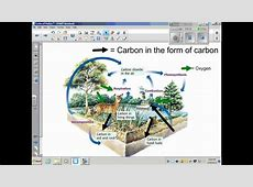 Oxygen Carbon Dioxide Cycle New Calendar Template Site