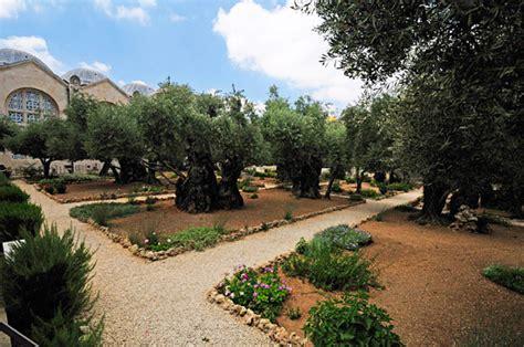 Der Garten Gethsemane by Die Todesangstbasilika Ist Gleich Neben Dem Garten