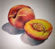Colored Pencil Still Life Drawing