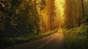 Road, Forest, Trees, Green, Nature, Landscape, Wallpapers, Hd, Desktop, And, Mobile, Backgrounds