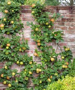 Plantes Grimpantes Mur : quel arbuste contre mur ~ Melissatoandfro.com Idées de Décoration