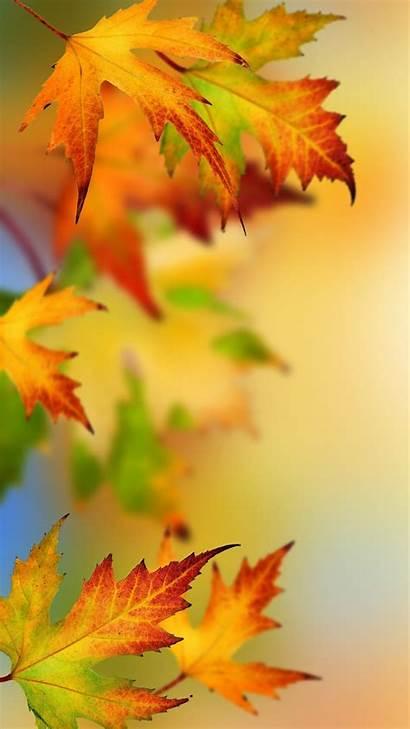 Autumn Leaves Wallpapers Samsung Edge Leaf Iphone