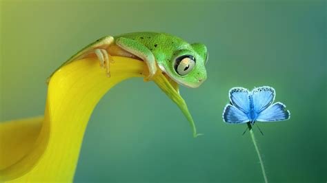 full hd wallpaper butterfly insect petal frog desktop
