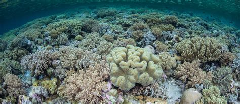 Wakatobi Snorkeling Tour - Coral Triangle Adventures