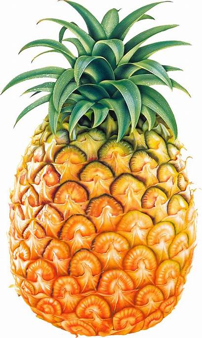 Pineapple Clipart Fruit Cliparting Natural Pages Remedies