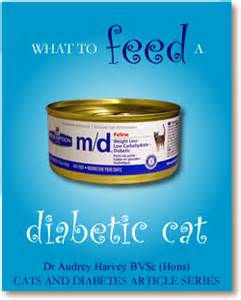 diabetic cat food what to feed a diabetic cat cats and diabetes