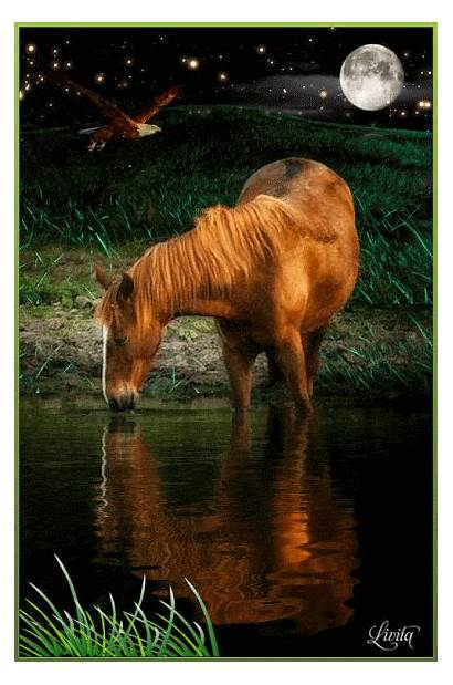 Caballos Horses Caballo Cavalos Horse Imagens Ak0
