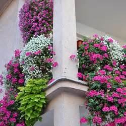 sommerblumen balkon über 1 000 ideen zu balkonkästen bepflanzen auf pflanzenkübel balkonkästen und