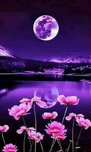 Best 25+ Good night moon ideas on Pinterest | Night gif ...