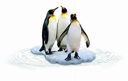 Pingouin Penguins Zezete2 Centerblog Clip Publie Par