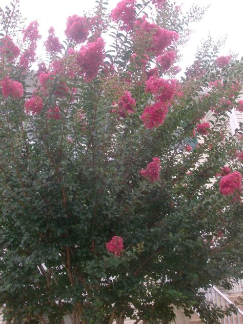 trees that pink flowers tree with pink flowers by a7xfan666 on deviantart