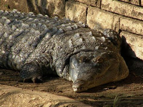 Flat Out Ugly and Disturbing Animals Amazing & Funny
