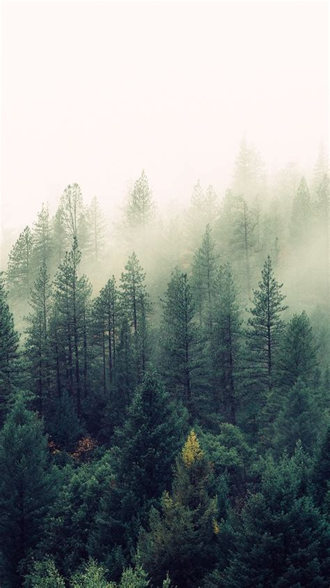 nature mist forests trees iphone wallpaper iphone wallpapers