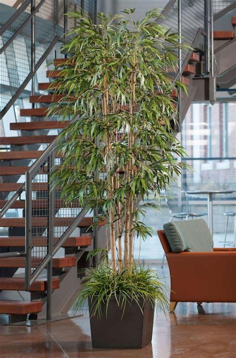 plante interieur pas cher 28 images plante interieur artificielle photo de fleur une pensee