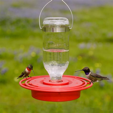 best hummingbird feeder duncraft best 1 hummingbird feeder 8 oz