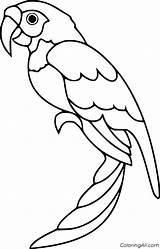 Parrot sketch template