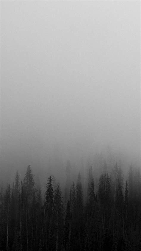 black  white mist forests wallpaper black wallpaper