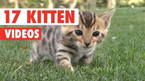 17 Funny Kitten Videos Compilation 2017 Youtube