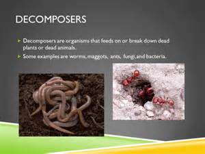 Food Chain Decomposer Examples
