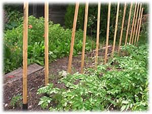 Comment Tuteurer Les Tomates : les tuteurs ~ Melissatoandfro.com Idées de Décoration