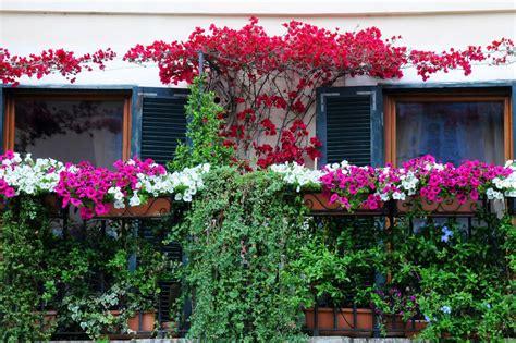 Schattenpflanzen Für Balkon by Welche Schattenpflanzen Eignen Sich F 252 R Den Balkon Ebay