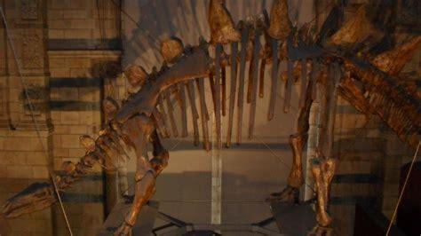 Natural History Museum  Lks2  Mayflower Primary School