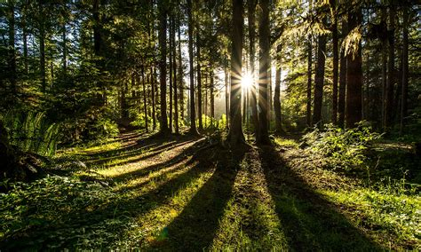 Nature-Based Climate Solutions Summit unites experts in ...